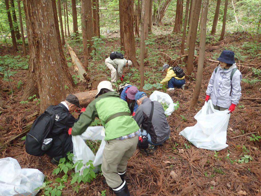 2018年5月18日北海道自然保護協会ボランティア活動2