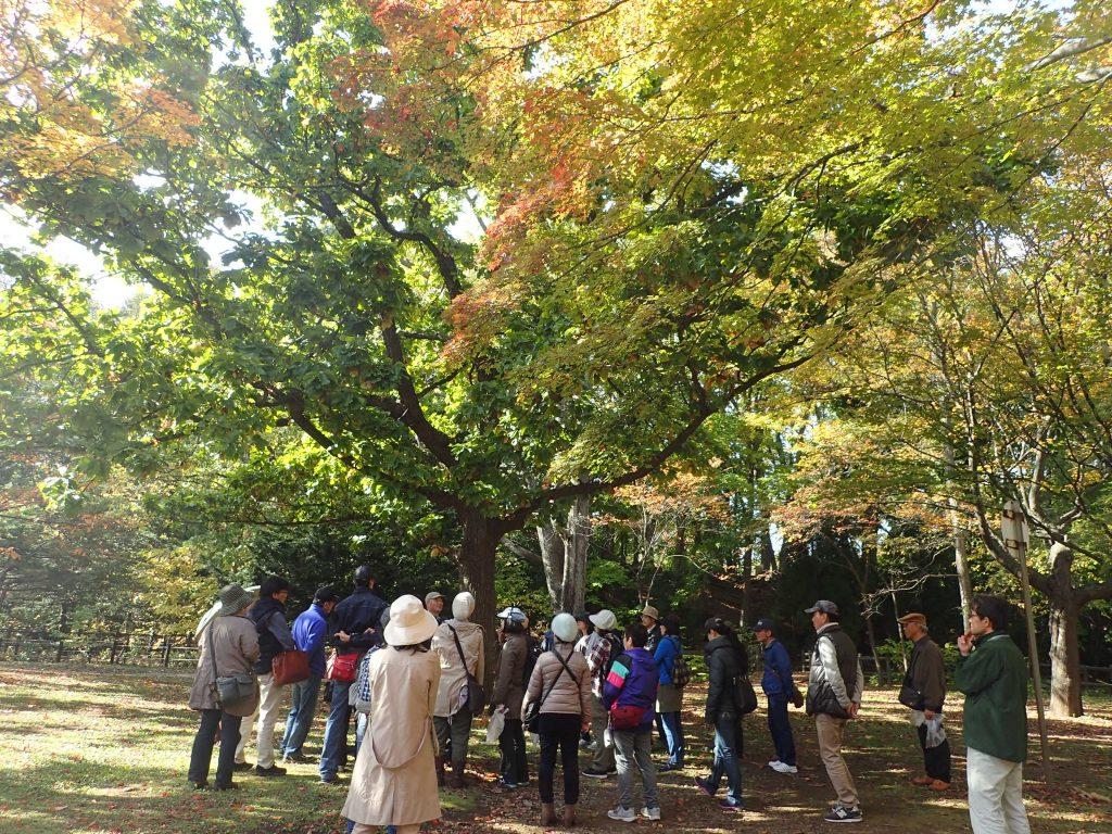 平成30年10月21日円山公園探訪ツアー3