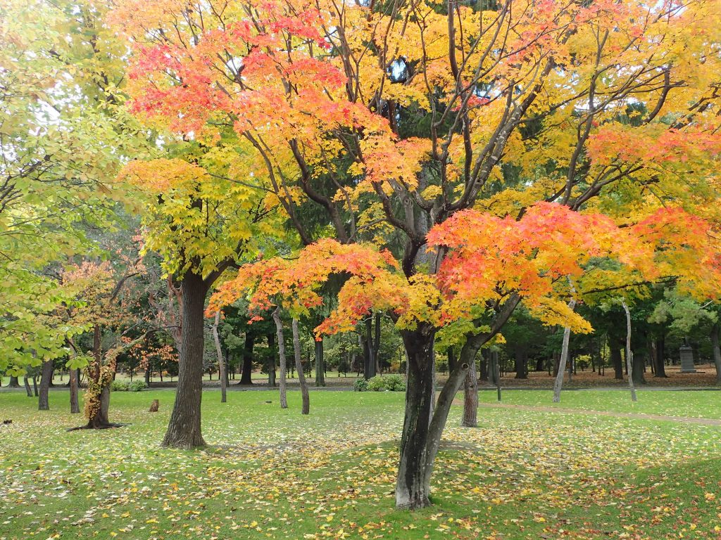 平成30年10月28日紅葉状況3