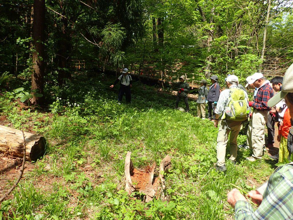 2019年5月17日北海道自然保護協会ボランティア活動1