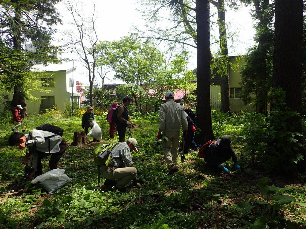 2019年5月17日北海道自然保護協会ボランティア活動2