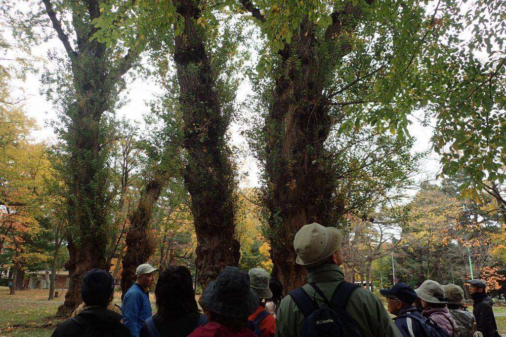 2019年10月26日円山公園探訪ツアー(樹木編)の様子2
