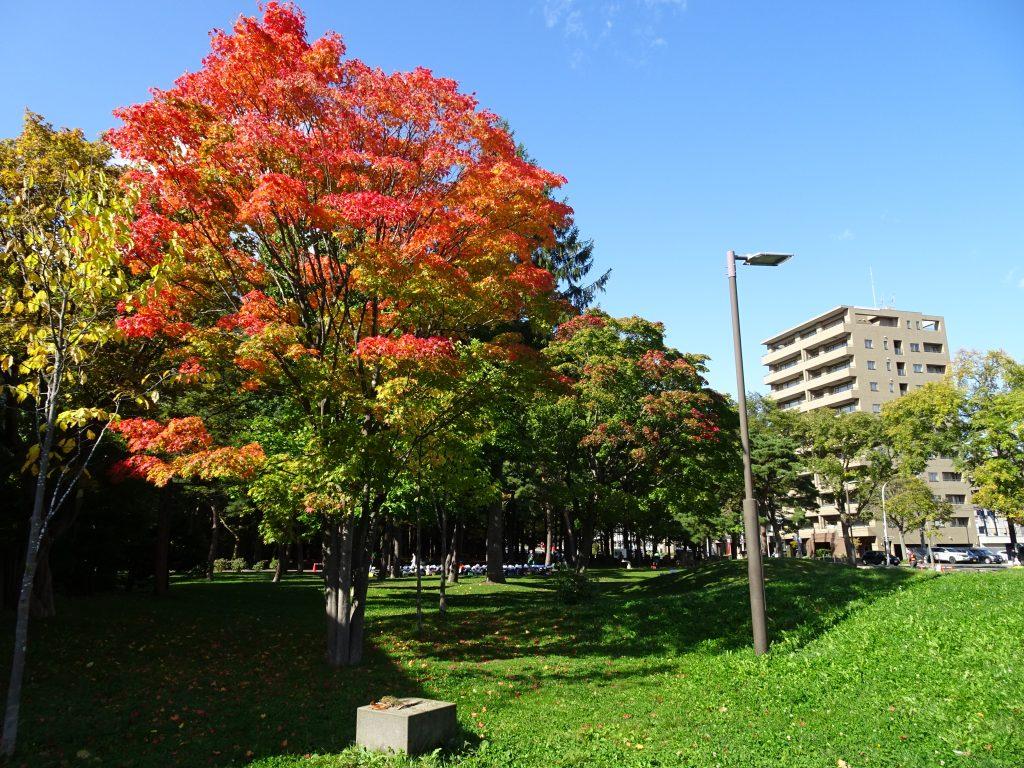 2020年10月14日紅葉の様子3